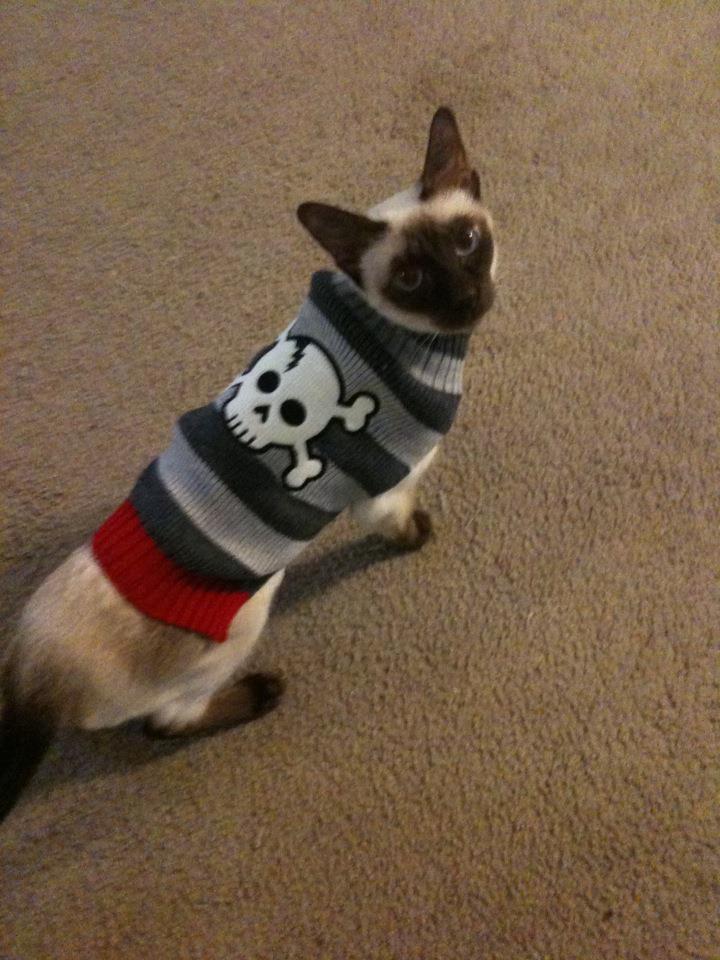 cat admission eligibility
