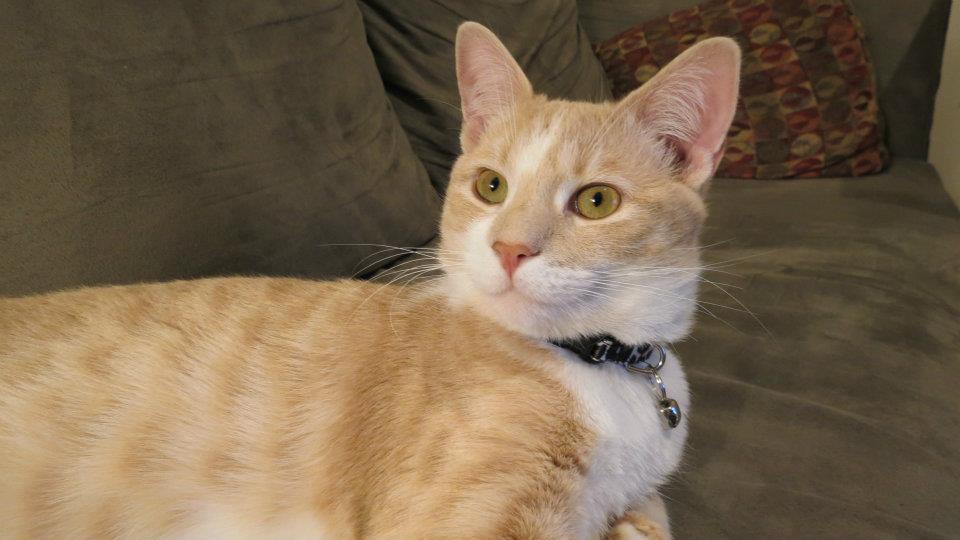 Squishy Nose Cat : Modern Cat Photo Contest Entry- Egon Modern Cat magazine