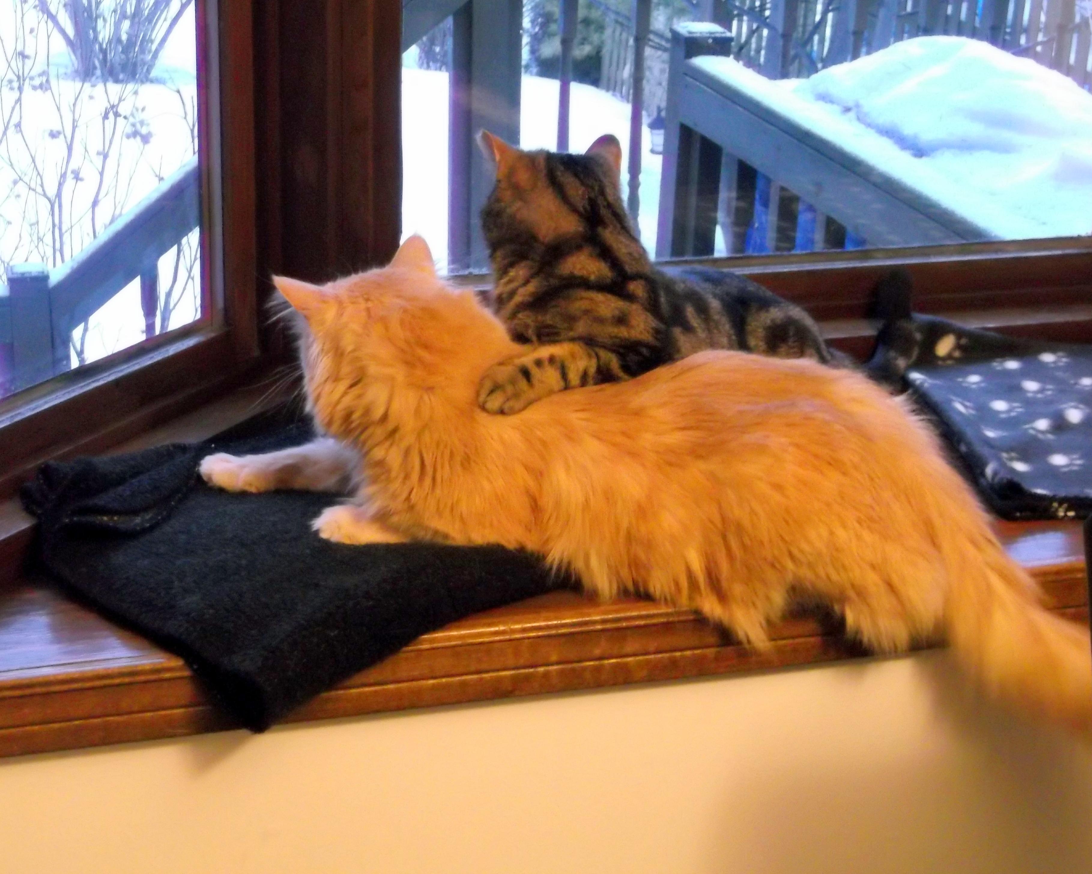 Cat Rescue Brantford