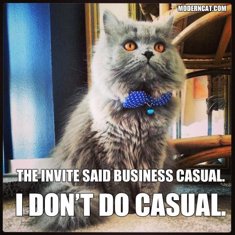 Cute Cat Memes Love