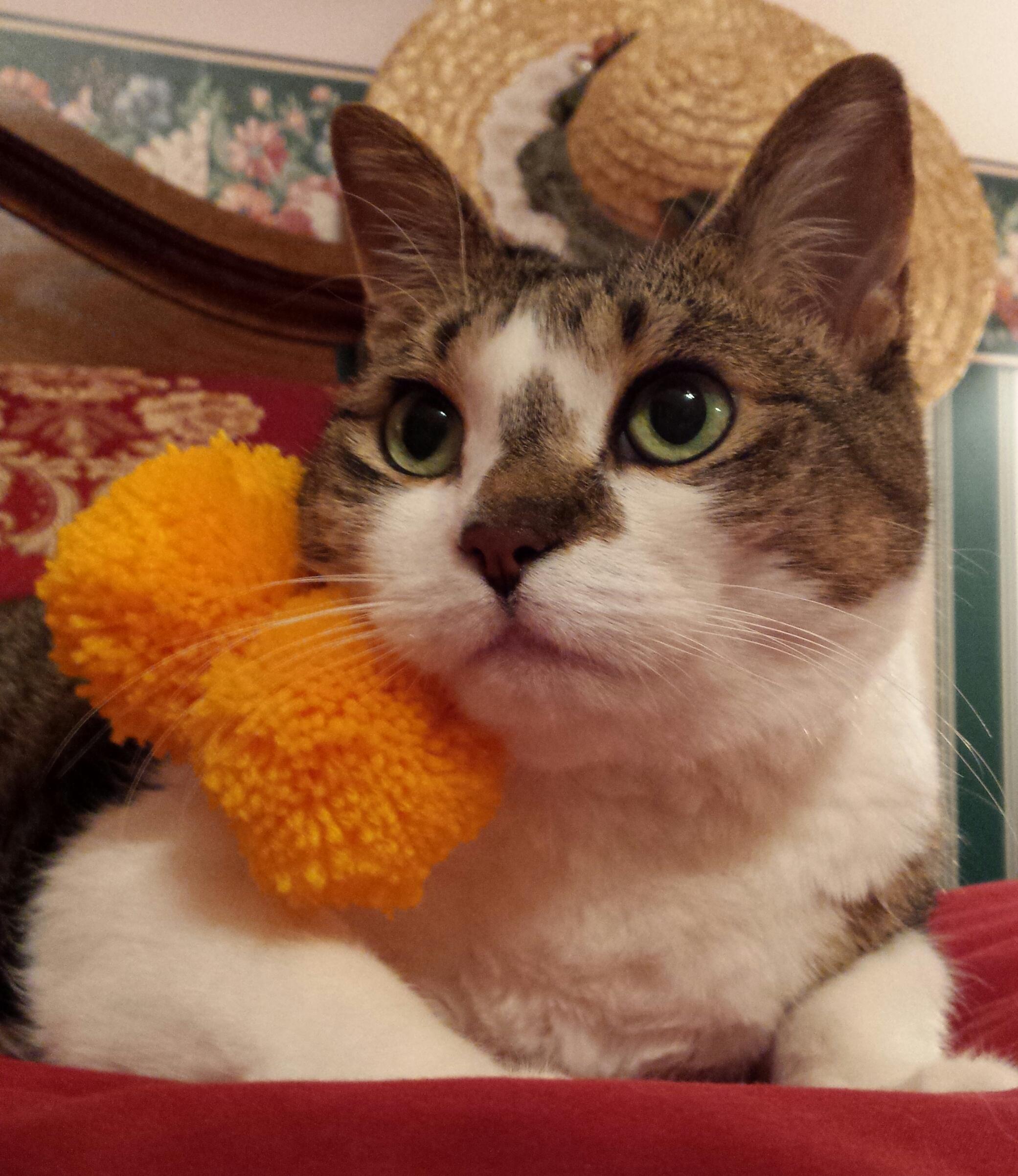 Leyla Belle - Modern Cat\'s Photo Contest