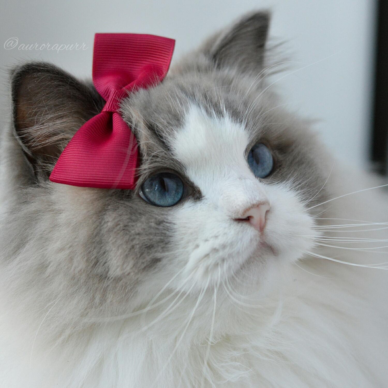 Кошечки гламурные картинки