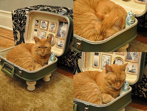 Diy suitcase bed modern cat - Idee cucito per la casa ...