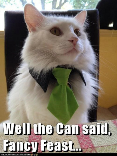 Cat Memes The Funniest And Cutest Cats Ever Modern Cat Magazine