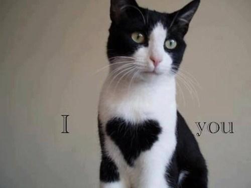 Animal i love you memes - photo#51