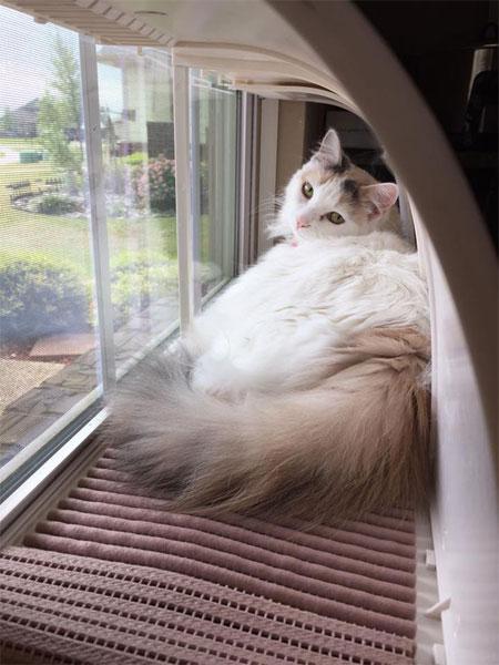 Throw That Old Cat Window Seat Away Modern Cat