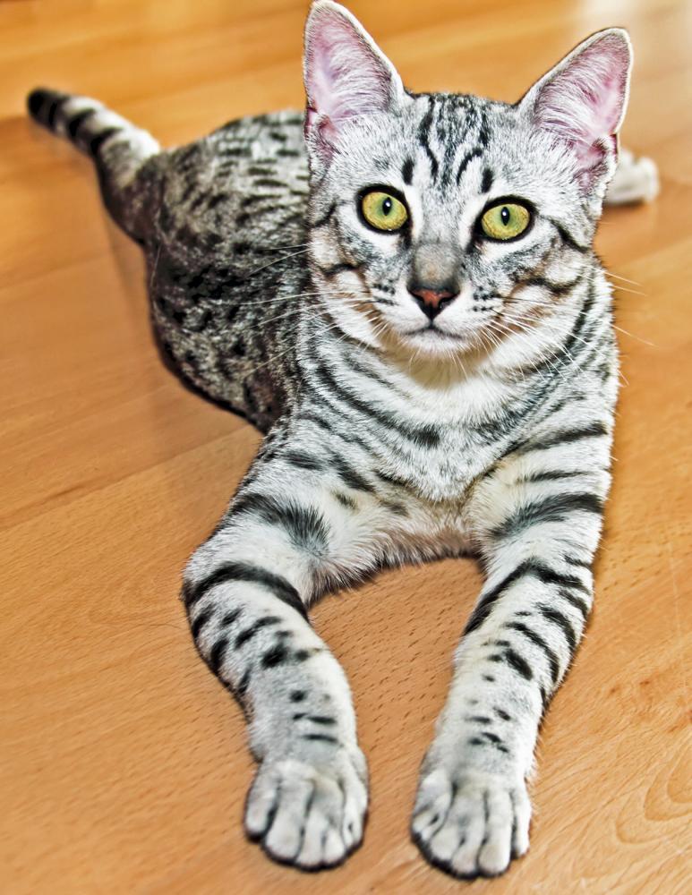 what is a feral kitten