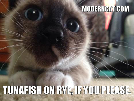 Even More Modern Cat Memes Modern Cat