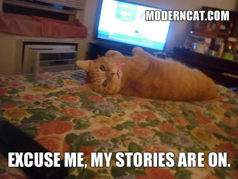 Modern Dog Modern Cat Inc