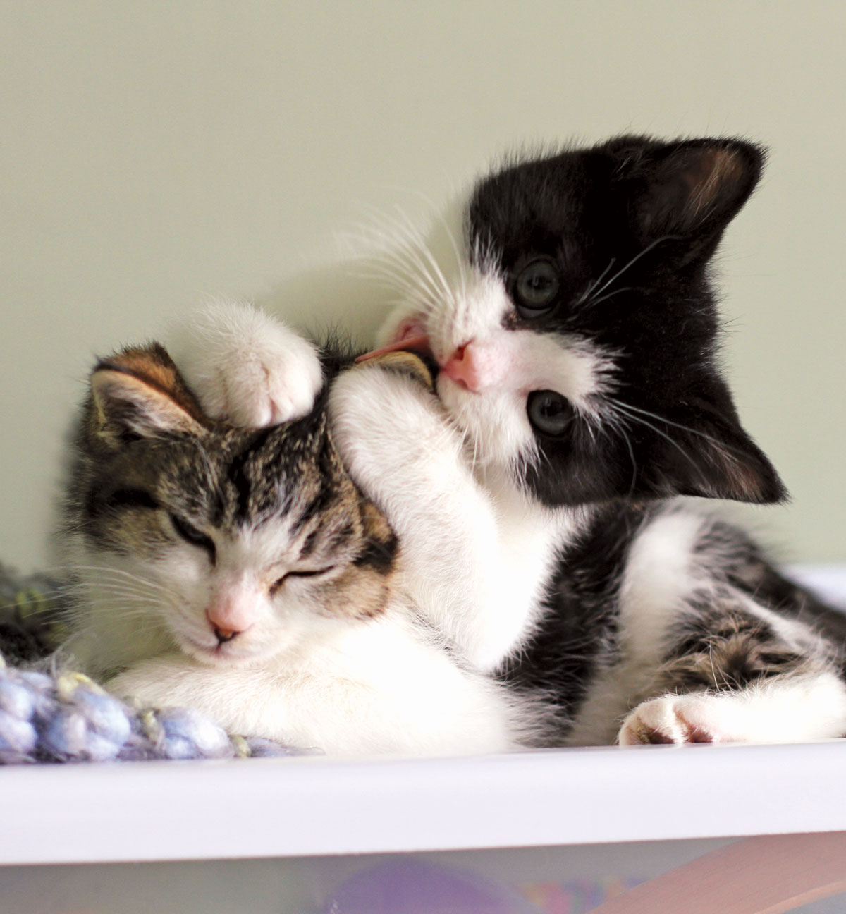 Good PR: Rescue Cats Find a Home on Social Media - Modern Cat